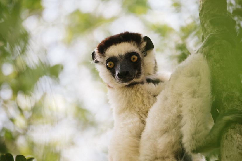 Madagascar | Travel Photography